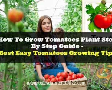 How To Grow Tomatoes Plant Step By Step Guide - Best Tomatoes Growing Tips