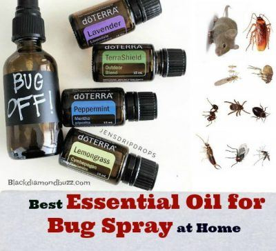 Best Essential Oil for Bug Spray at Home