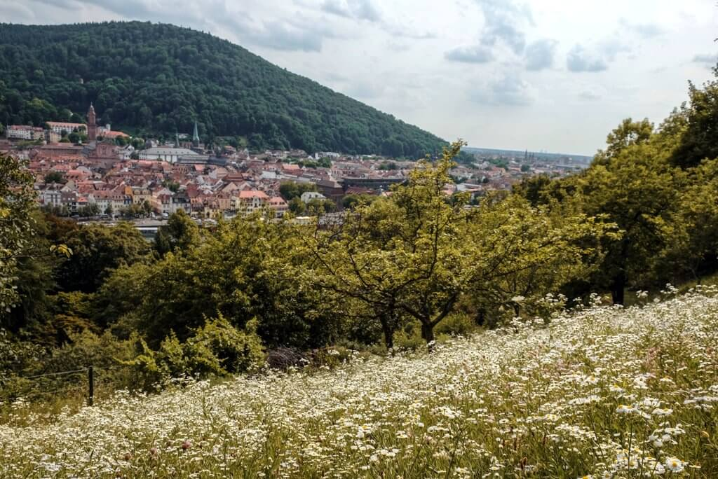 Heidelberg Tips Snake Trail