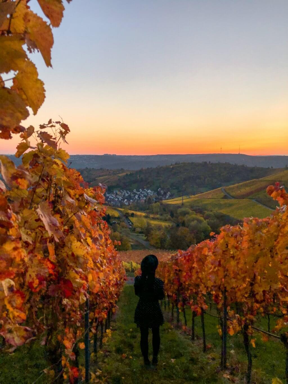 Zonsondergang in de wijngaarden van Stuttgart