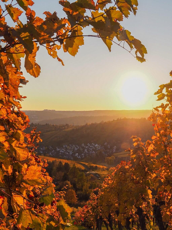 Uhlbach Stuttgart wijngaarden