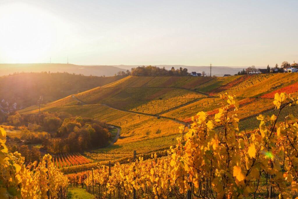 De wijngaarden van Stuttgart Rotenberg in de herfst
