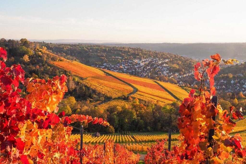 Wijnwandeling Stuttgart
