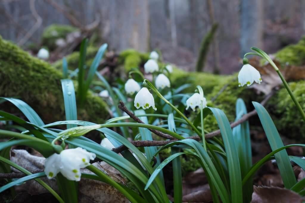 Wandeling in het voorjaar Maerzenbecher