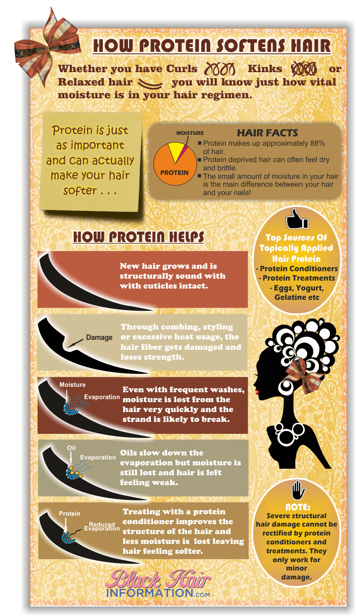 How protein softens your hair Infographic