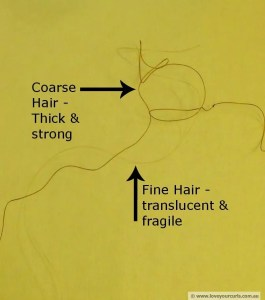 A visual comparison of fine and coarse hair strands (picture source: http://loveyourcurls.com.au/wp-content/uploads/2013/10/Hair-texture-Fine-Coarse-hair.jpg)