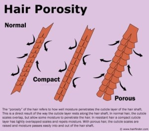for all the budding trichologists out there (picture source: http://www.hairfinder.com/hairquestions/hairporosity.jpg)