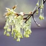 spring tree buds-SpringHoliday-0002