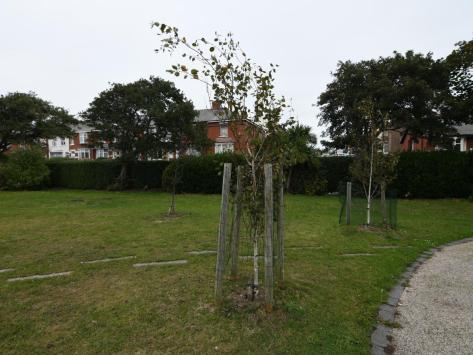 Revoe Park, where newly planted trees were vandalised
