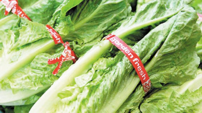 Americans have been warned not to eat Romaine Lettuce