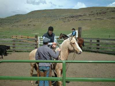 """Will coaches Dave on how to get his Palomino """"DUCATI"""" calmed down and working!"""