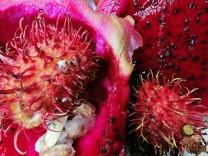 rizal house penasatanan 283_closeup dragonfruit rambutan