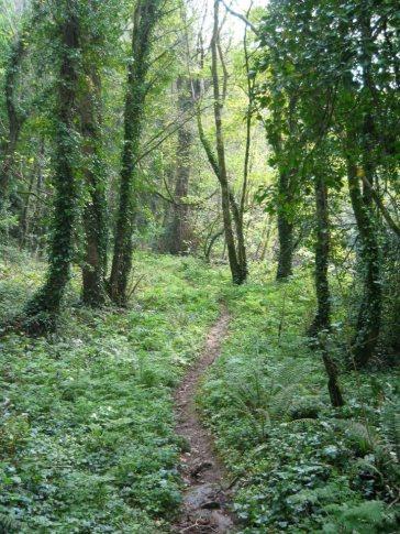www-blackwatercastle-com-woodland-walk
