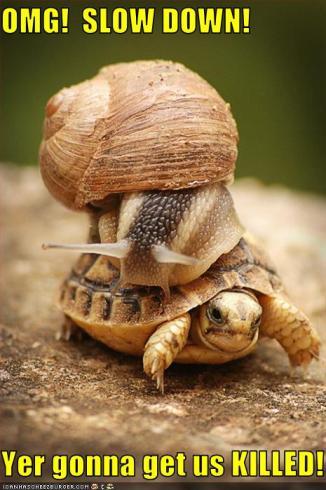 Turtle Snail