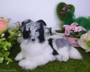 Frank de Shetland Sheepdog