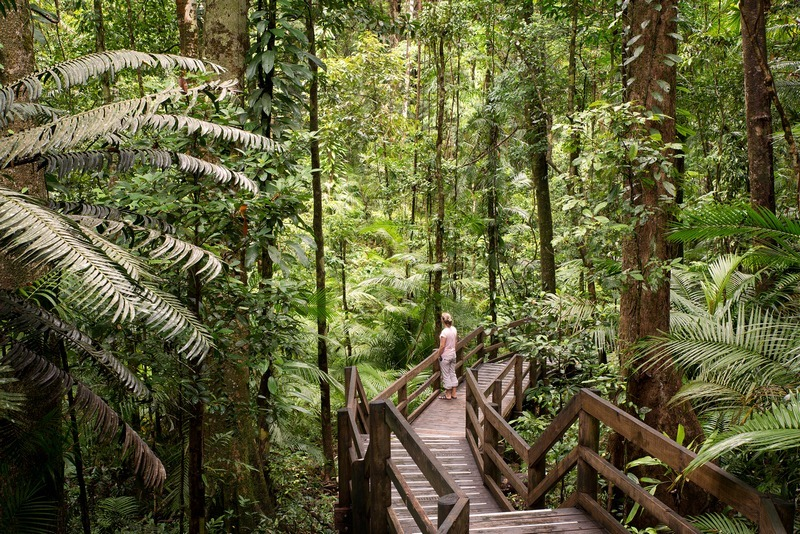 daintree national park, australia