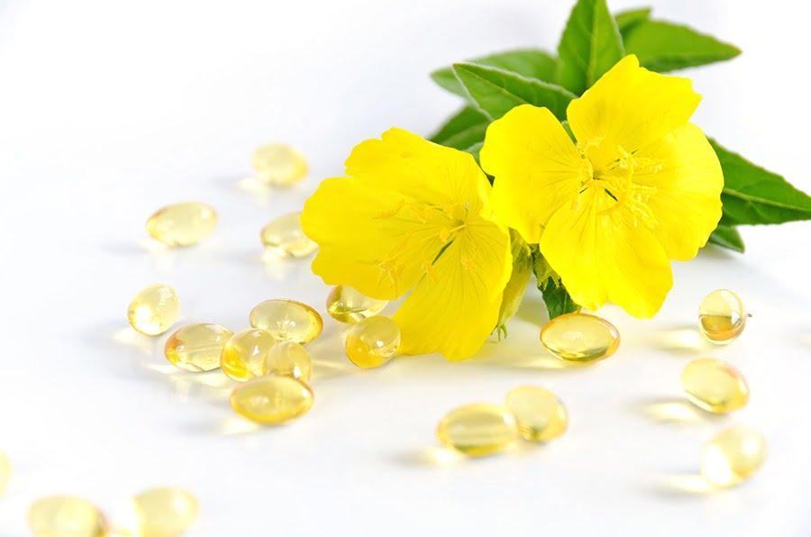 bunga evening primrose berwarna kuning untuk bahan baku evening primrose oil