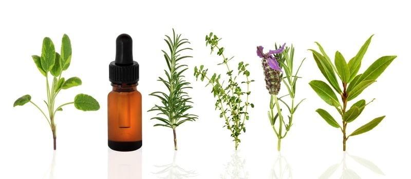 tumbuhan yang bisa dijadikan essential oil