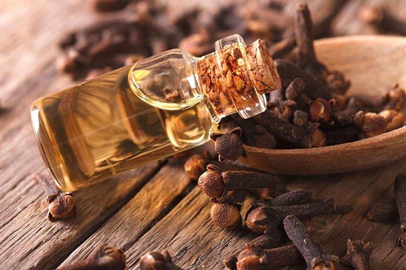 bunga cengkeh dan clove essential oil