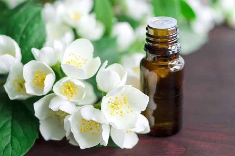 bunga melati dan jasmine essential oil