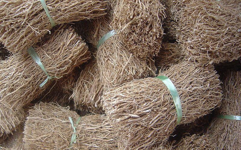 akar wangi kering untuk bahan baku vetiver essential oil