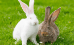 16 Fakta Unik & Menarik tentang Kelinci yang Perlu Diketahui
