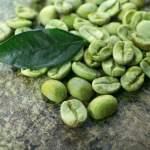 biji kopi hijau segar, fresh green bean coffee