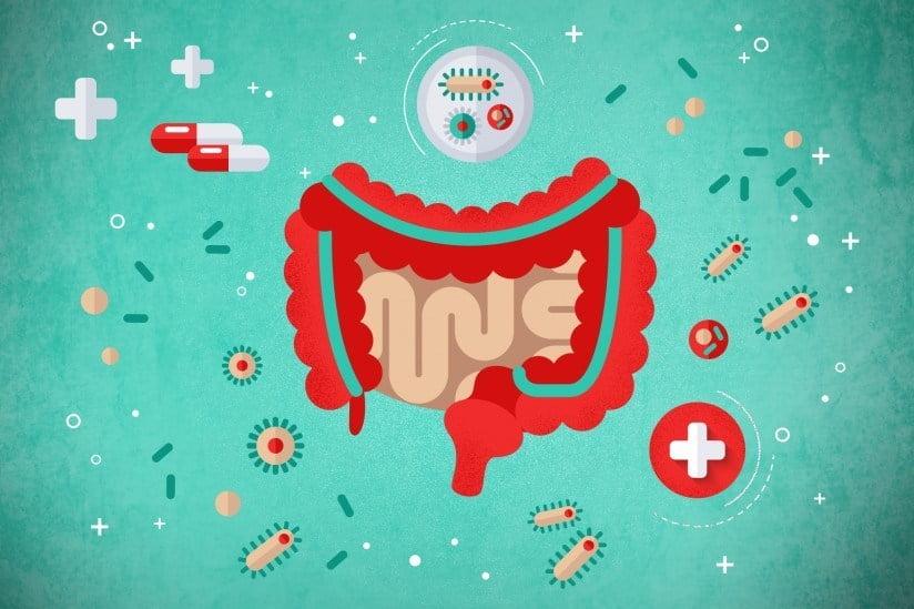 sistem pencernaan sehat karena probiotik