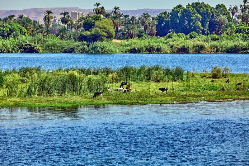 Tepian Sungai Nil yang hijau karena lumpurnya yang subur
