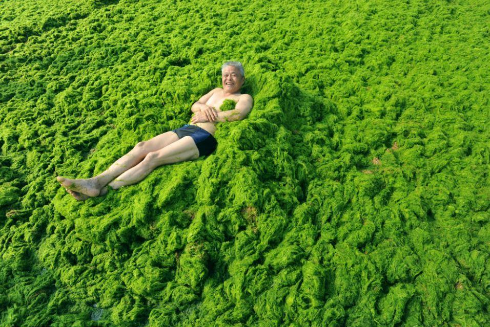 orang berenang di lautan ganggang hijau