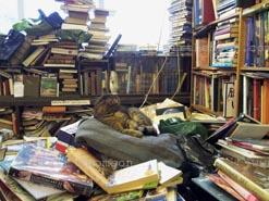 bookshopcat