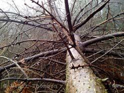 tree close
