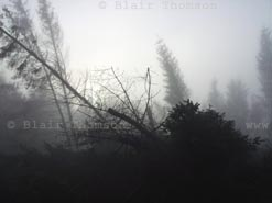 tree fog 1