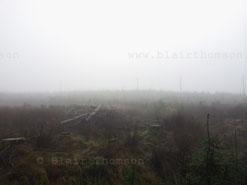 tree fog 2