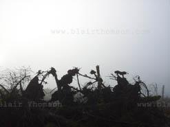 tree fog 3