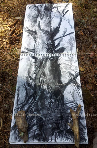 Cairngorms Forest 4 (www.blairthomson.com)
