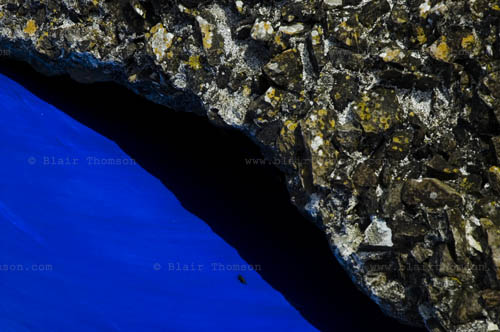 insect on cobalt blue next to a dark black shadow and rough stone or concrete up close