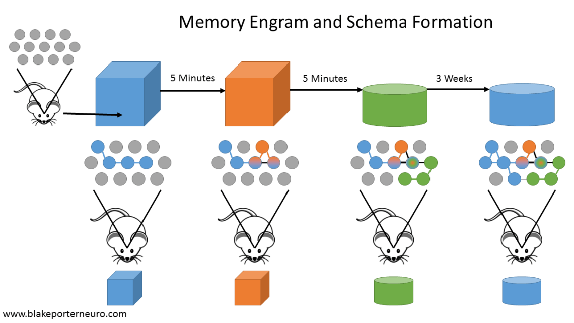 Inside Out Memory Formation Schema Blake Porter Neuroscience