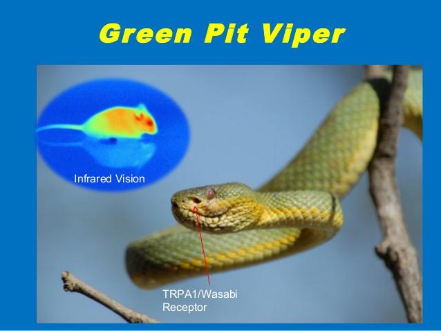 Snake Infrared Vision. Credit: Dr Subhash Ranjan