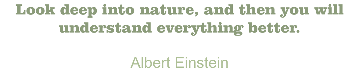 Blanchard Quote Albert Einstein