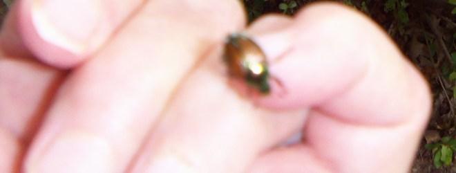 Beetles, Butterflies, and Bugs