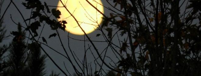 The Many Moods of Moonlight
