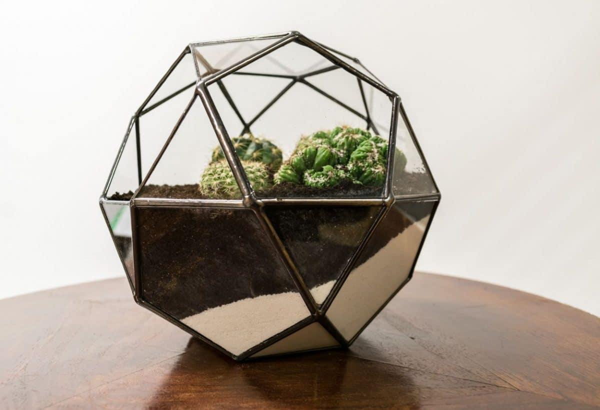 decorar con cactus un terrario - resultado