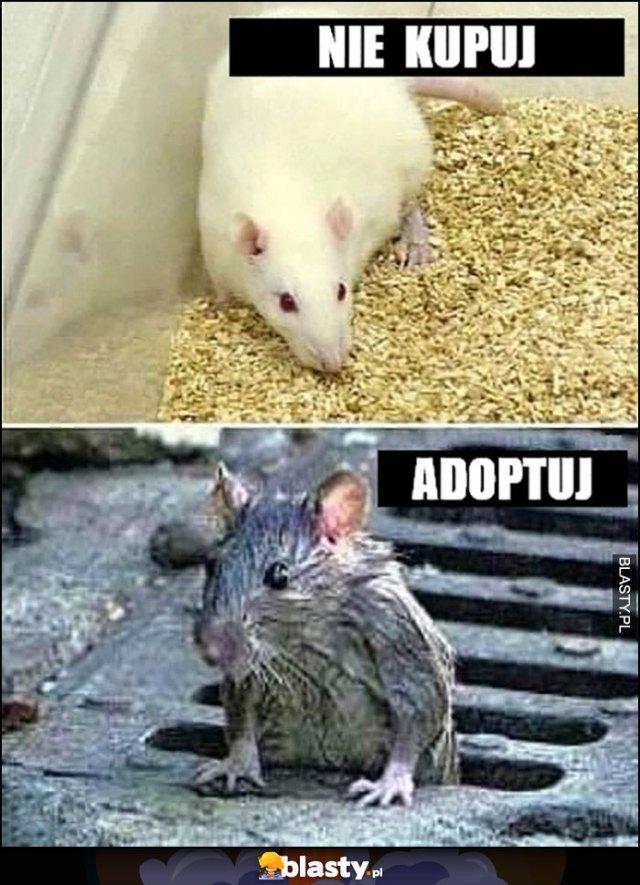 Nie kupuj myszy adoptuj szczura memy, gify i śmieszne obrazki facebook,  tapety, demotywatory zdjęcia