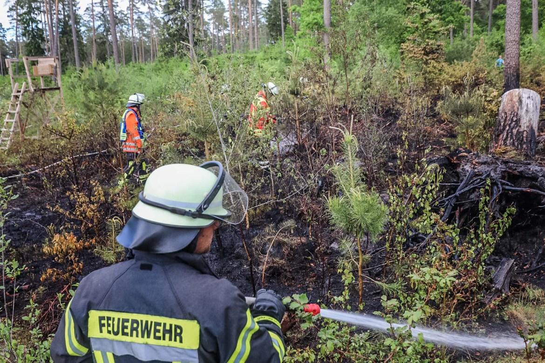 Über 200 qm Waldboden in Brand! – Einsatzkräfte löschen im Landkreis Harburg Waldbrand