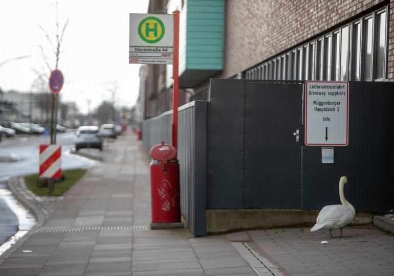Harte Landung - Schwan wartet im Hamburger Industriegebiet auf den Bus