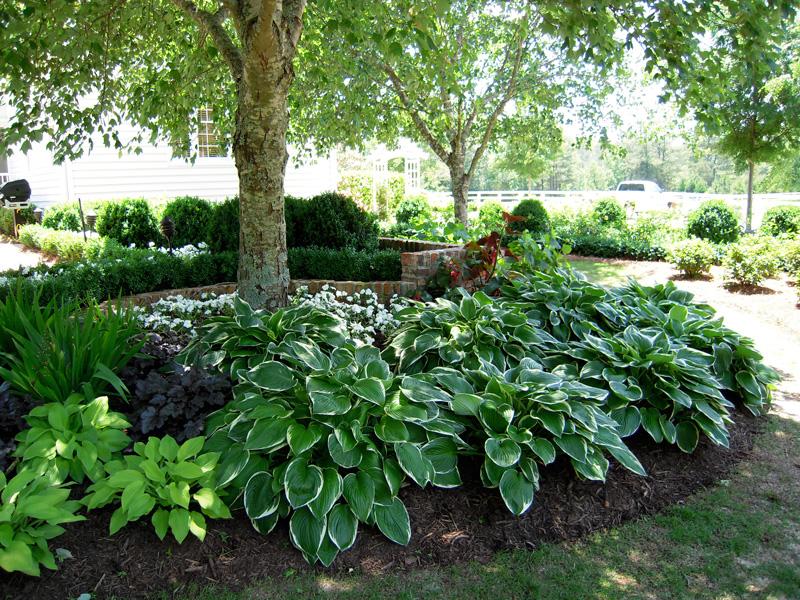 Shady Yard Solutions Miami | Blaum Landscaping on Shady Yard Ideas id=38813