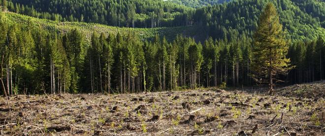First-Strike Reforestation