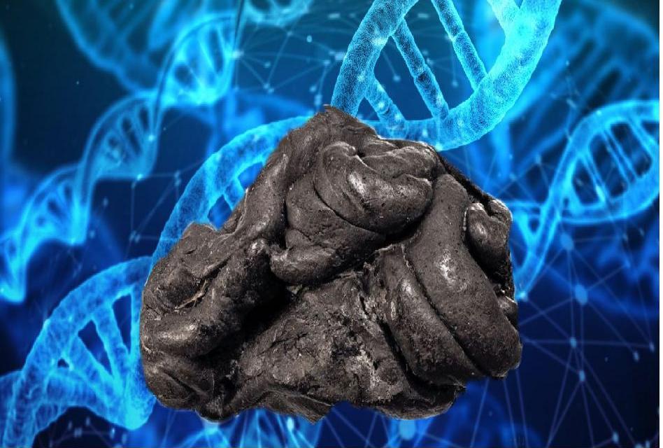 """Žvýkačka"" přináší 5 700 let starý lidský genom z doby kamenné a ústní mikrobiom"