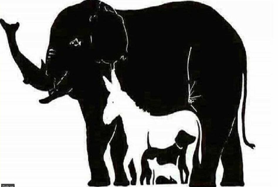 Pouze lidé s IQ větším než 120 vidí více než 7 zvířat, kolik jich vidíte vy?